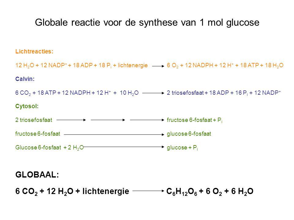 Globale reactie voor de synthese van 1 mol glucose