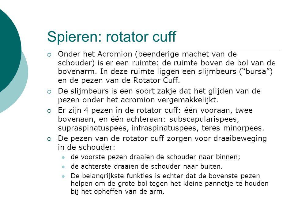 Spieren: rotator cuff
