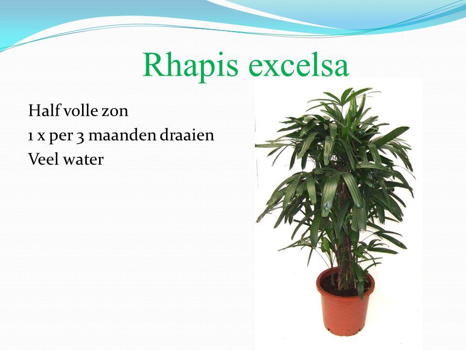 Rhapis excelsa Half volle zon 1 x per 3 maanden draaien Veel water