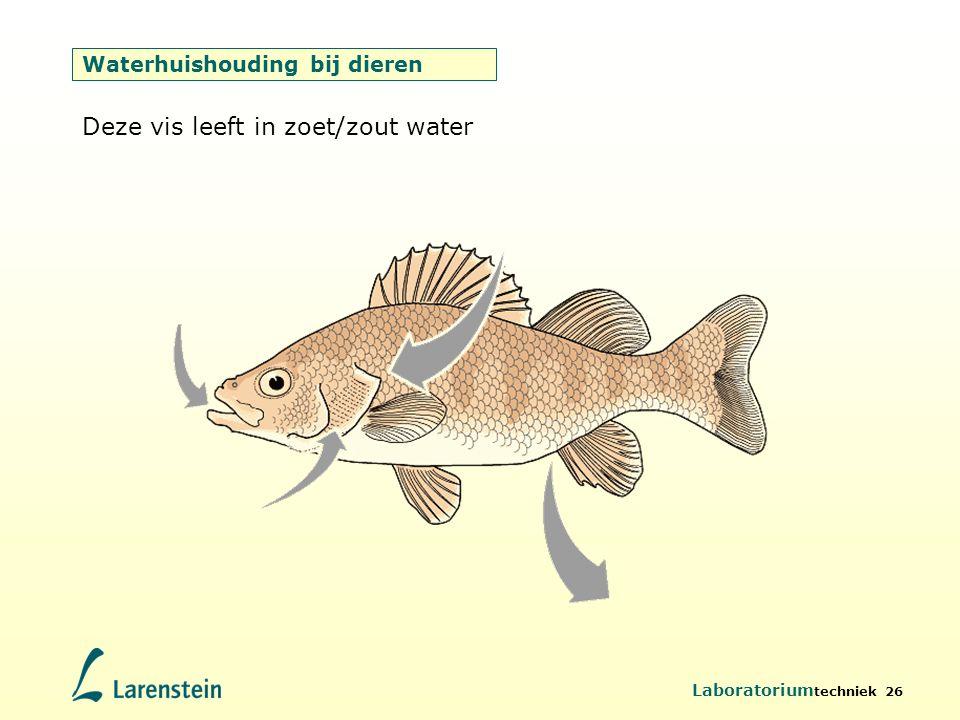 Waterhuishouding bij dieren
