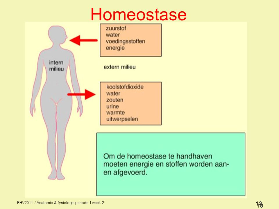 Homeostase FHV2011 / Anatomie & fysiologie periode 1 week 2 13