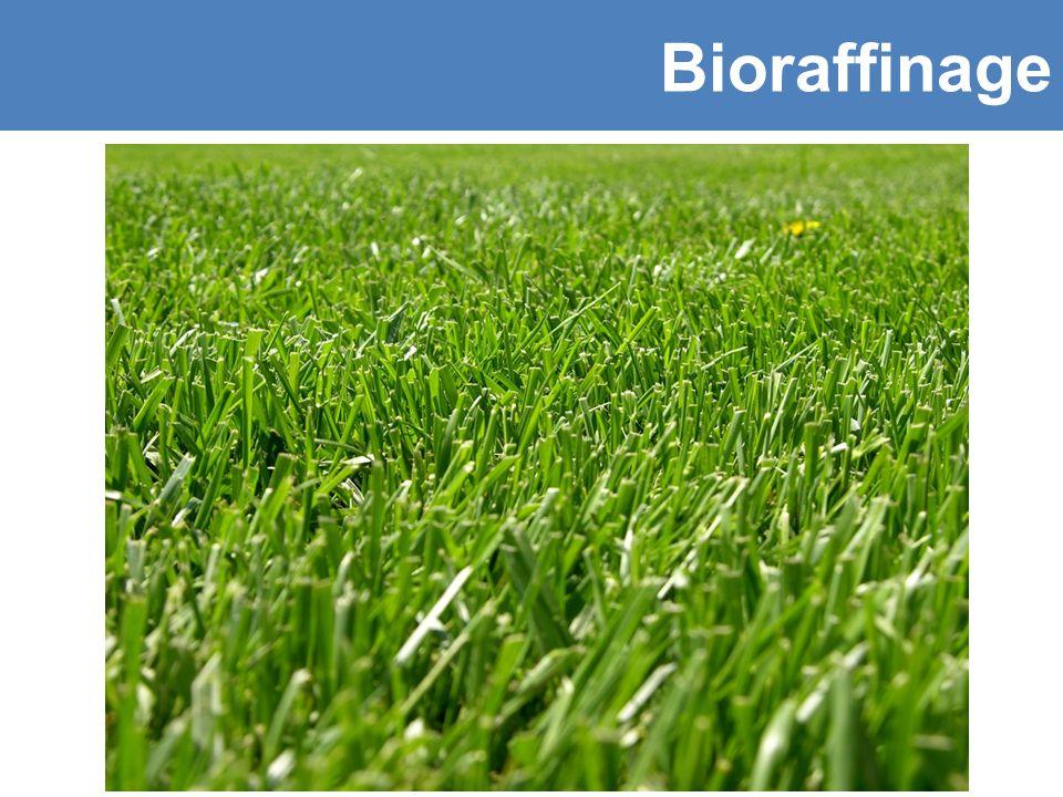 Bioraffinage Toepassingsgebieden van biomassa