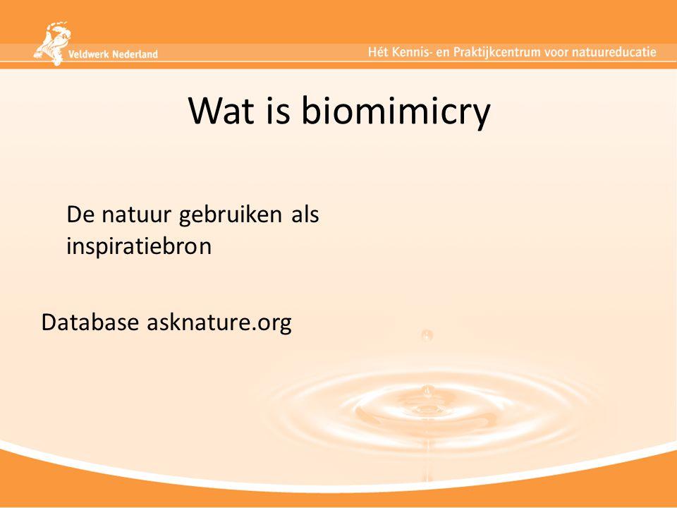 Wat is biomimicry De natuur gebruiken als inspiratiebron