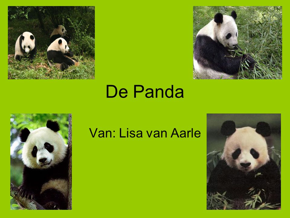 De Panda Van: Lisa van Aarle