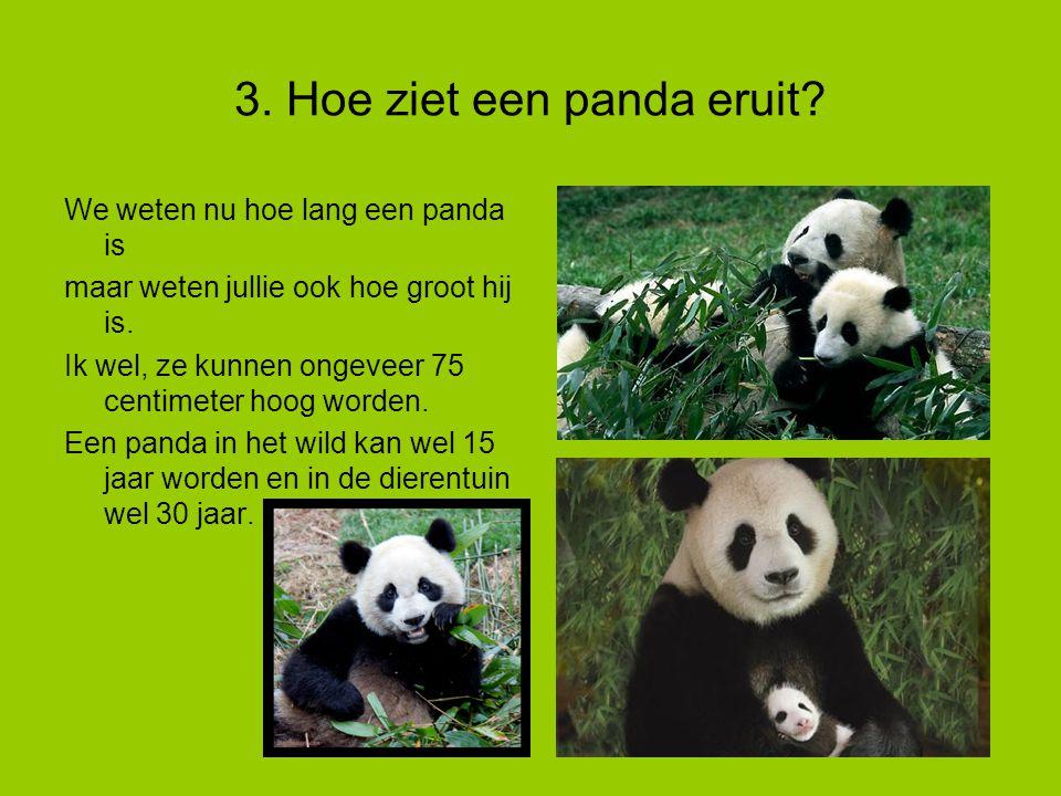 3. Hoe ziet een panda eruit