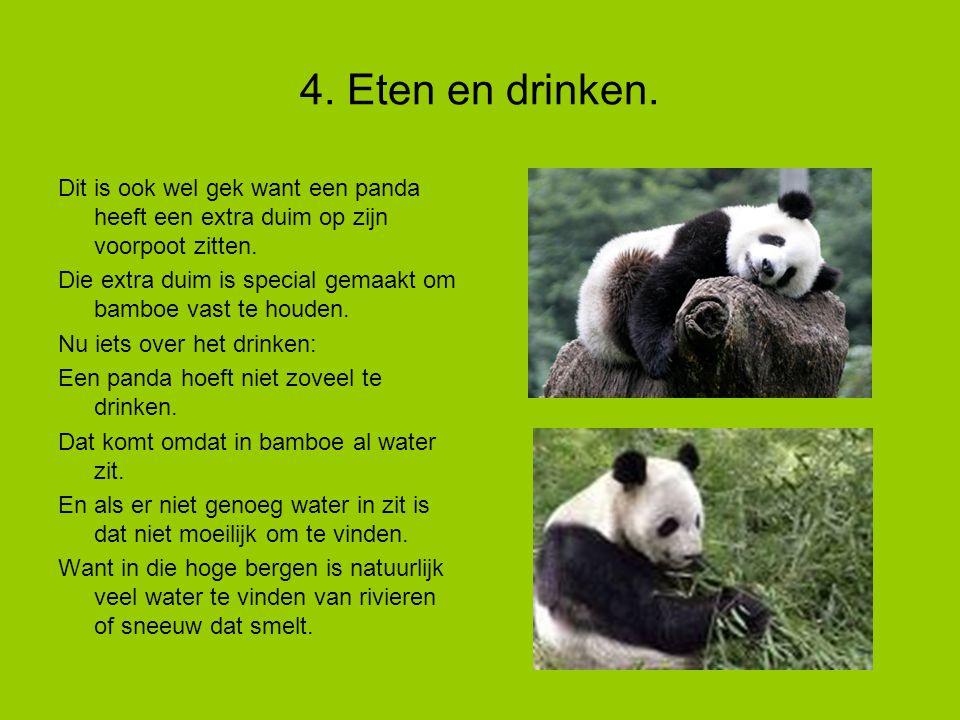 4. Eten en drinken. Dit is ook wel gek want een panda heeft een extra duim op zijn voorpoot zitten.