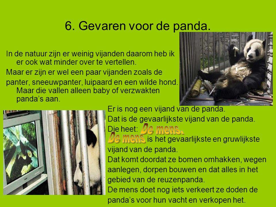6. Gevaren voor de panda.