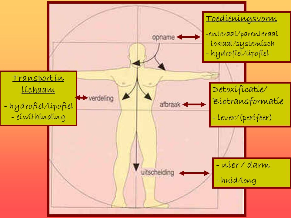 - hydrofiel/lipofiel - eiwitbinding