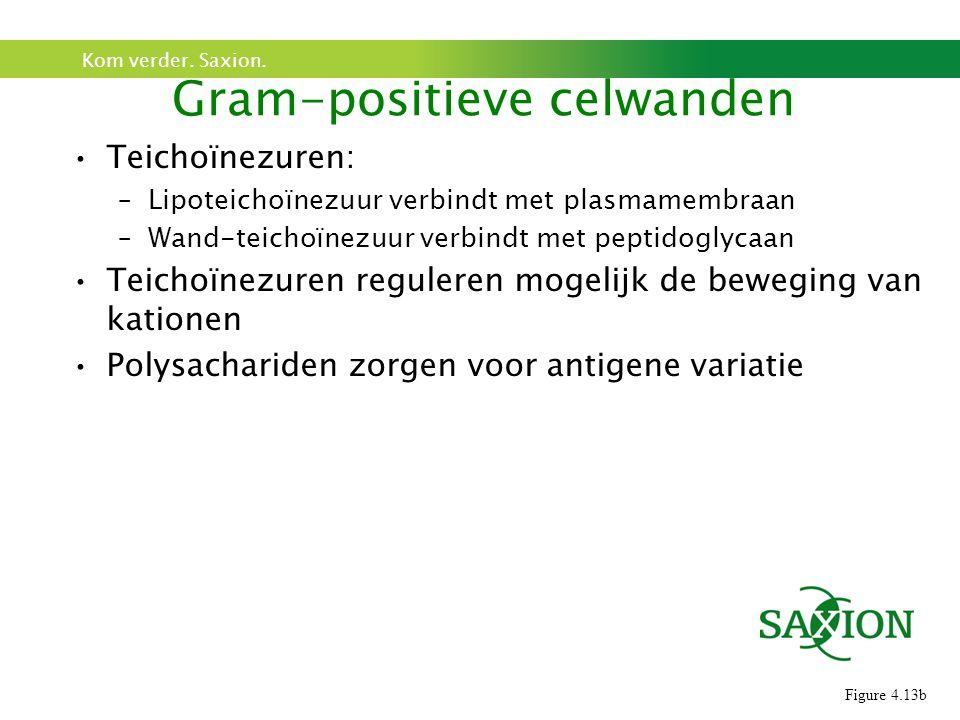 Gram-positieve celwanden