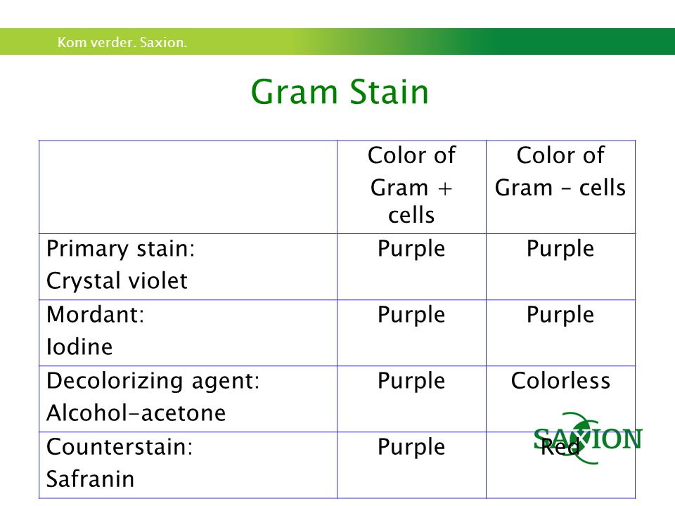 Gram Stain Color of Gram + cells Gram – cells Primary stain: