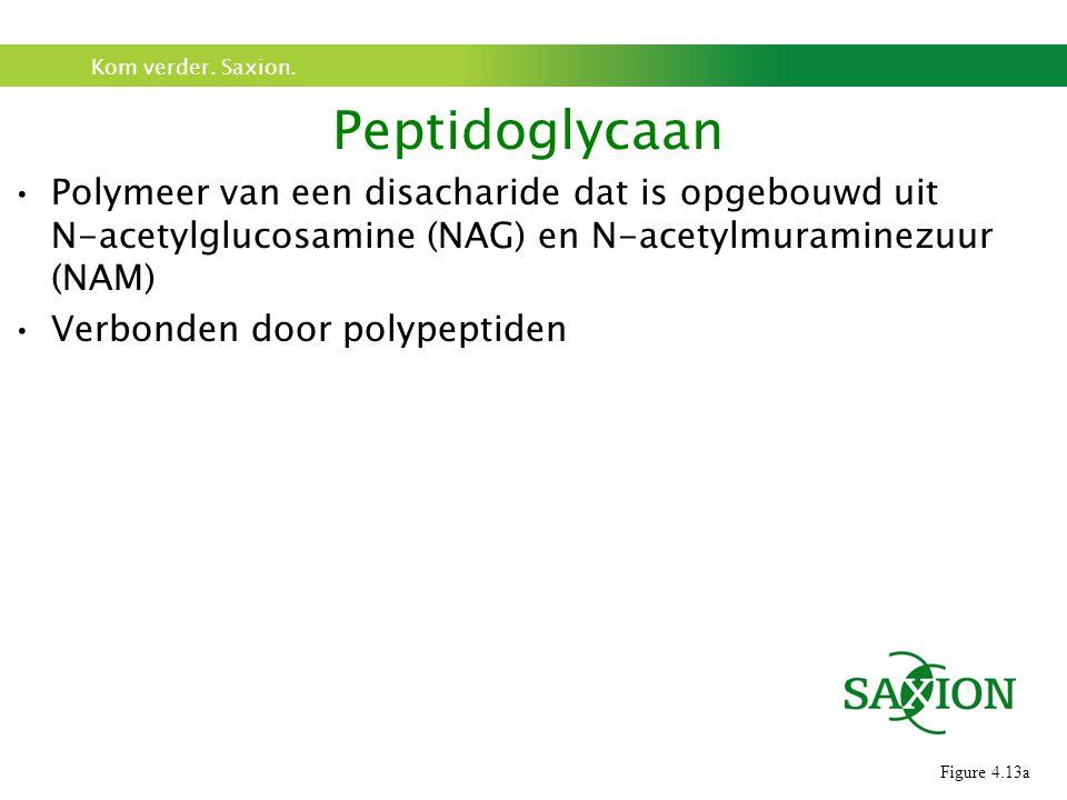 Peptidoglycaan Polymeer van een disacharide dat is opgebouwd uit N-acetylglucosamine (NAG) en N-acetylmuraminezuur (NAM)