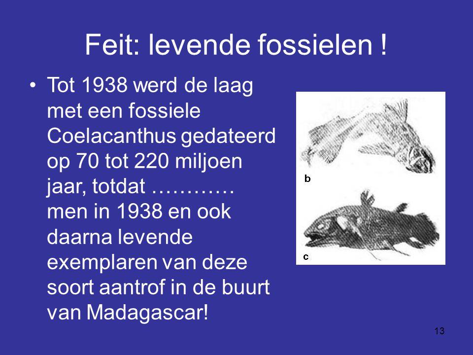 Feit: levende fossielen !