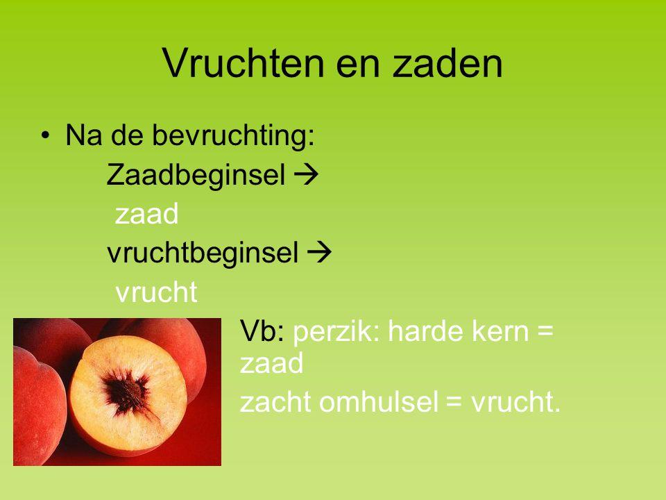 Vruchten en zaden Na de bevruchting: Zaadbeginsel  zaad