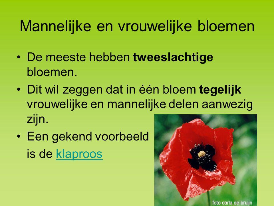 Mannelijke en vrouwelijke bloemen