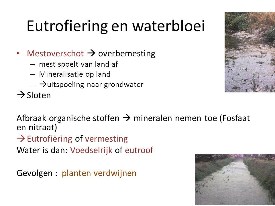 Eutrofiering en waterbloei