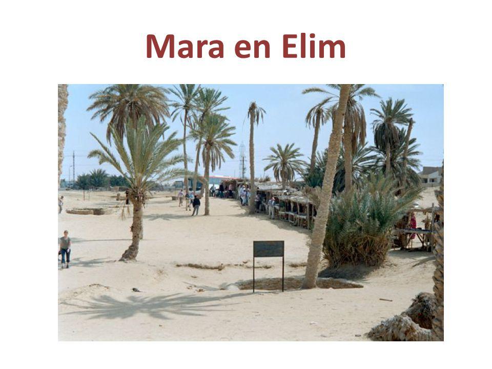 Mara en Elim