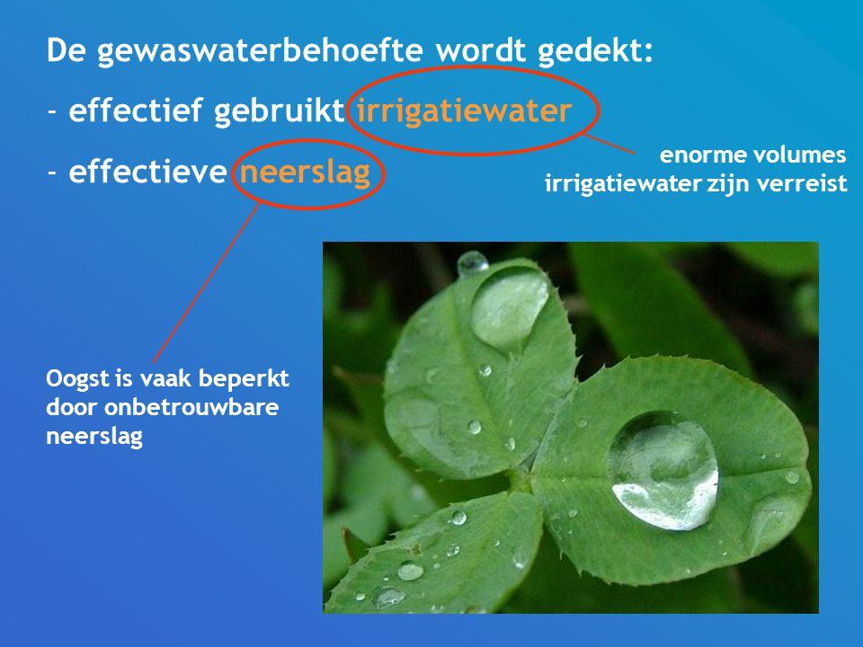 De gewaswaterbehoefte wordt gedekt: effectief gebruikt irrigatiewater