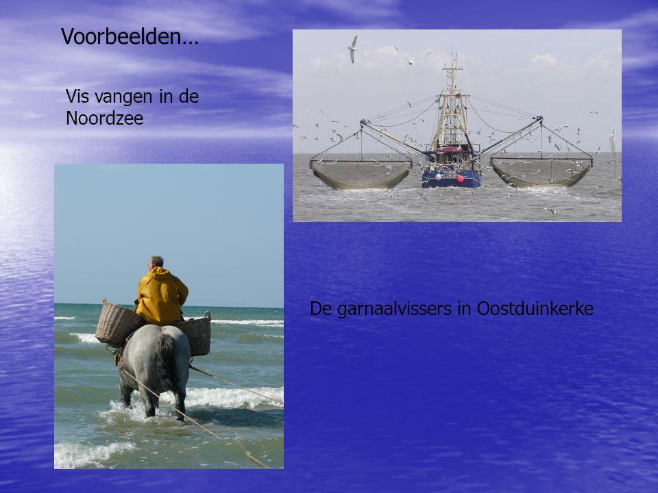 Voorbeelden… Vis vangen in de Noordzee