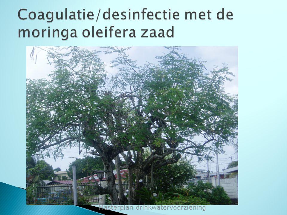 Coagulatie/desinfectie met de moringa oleifera zaad