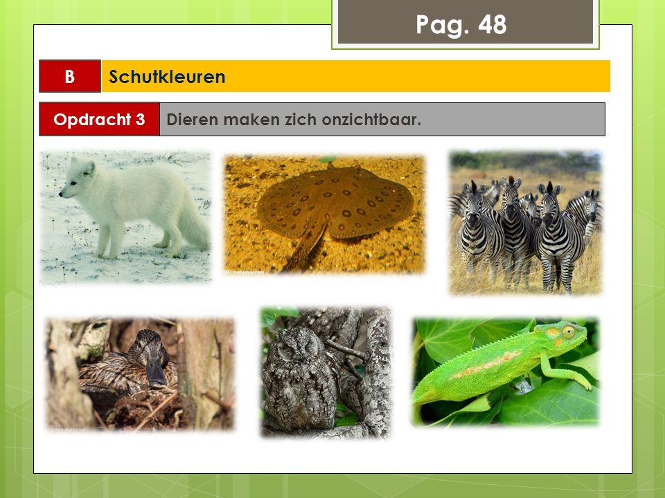 Pag. 48 B Schutkleuren Opdracht 3 Dieren maken zich onzichtbaar.