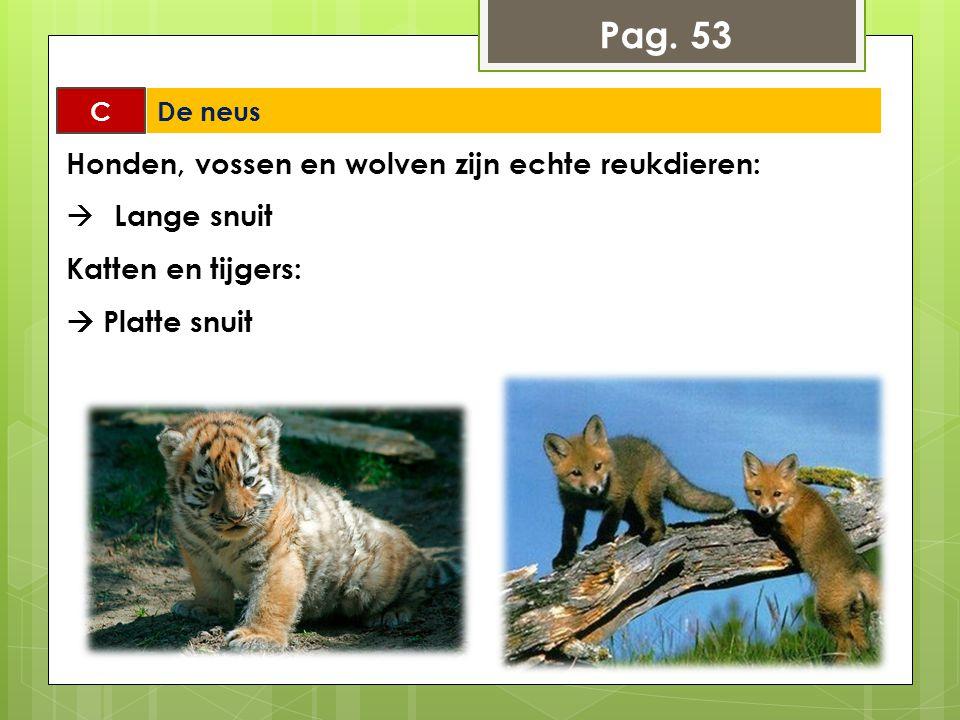 Pag. 53 Honden, vossen en wolven zijn echte reukdieren: Lange snuit