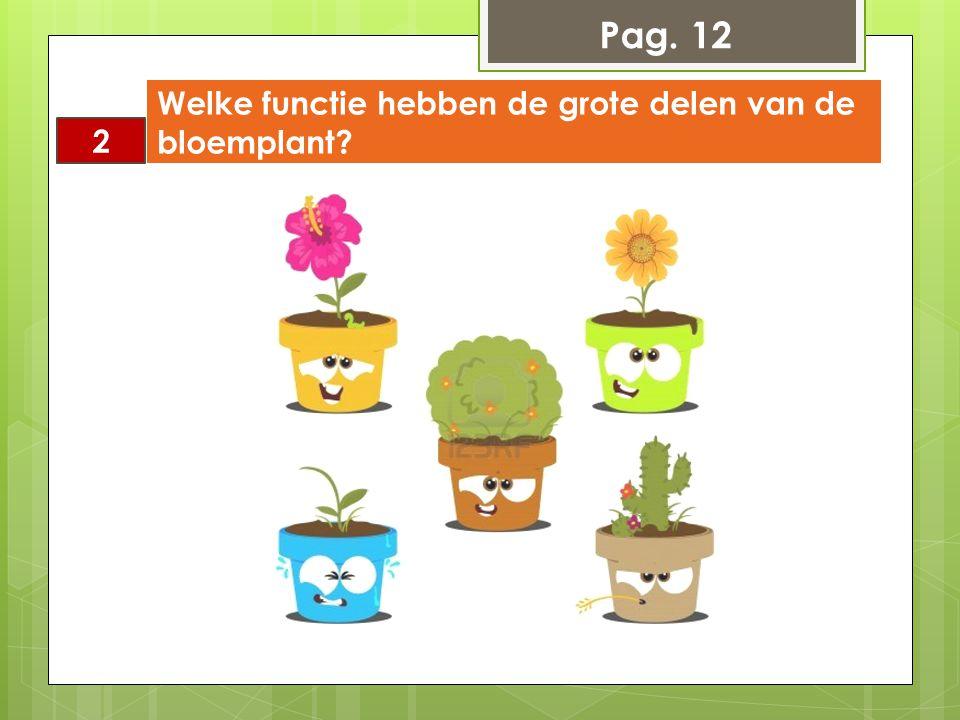 Pag. 12 Welke functie hebben de grote delen van de bloemplant 2