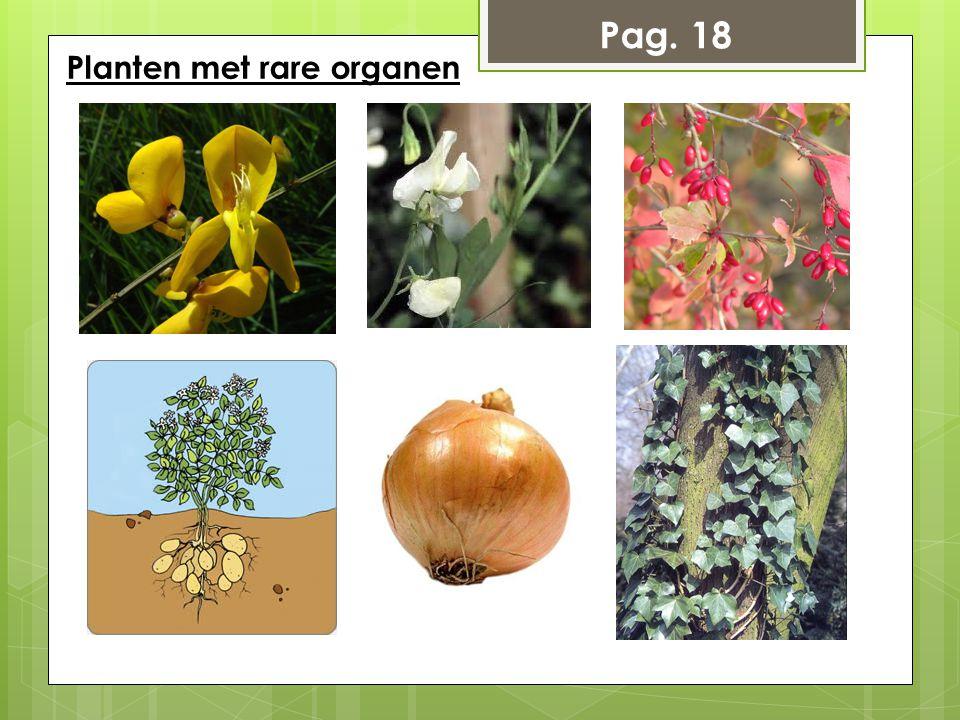 Pag. 18 Planten met rare organen