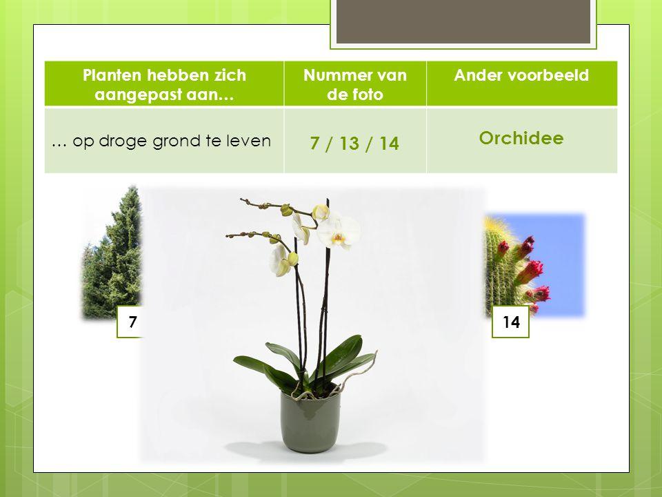Planten hebben zich aangepast aan…