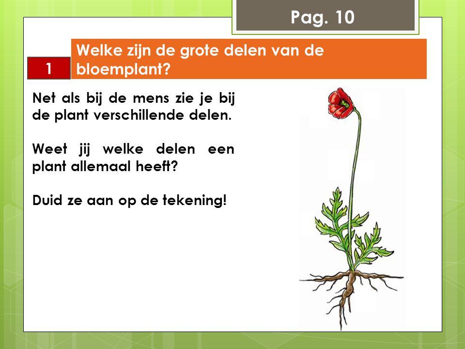 Pag. 10 Welke zijn de grote delen van de bloemplant 1