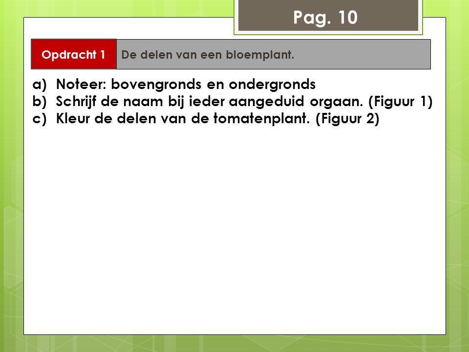 Pag. 10 Noteer: bovengronds en ondergronds