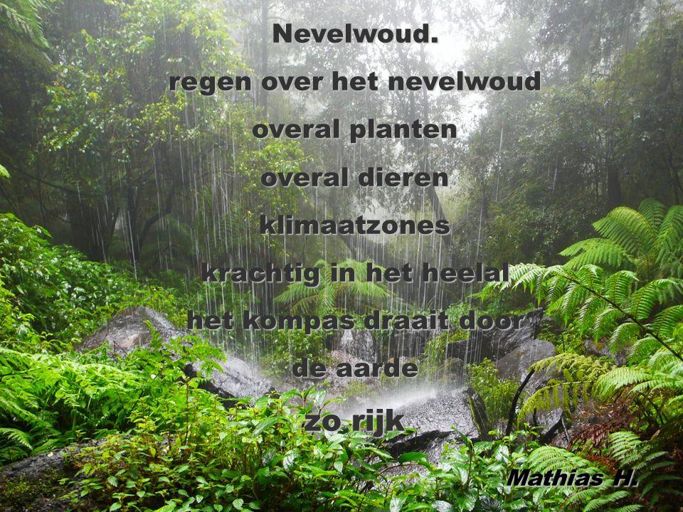 regen over het nevelwoud
