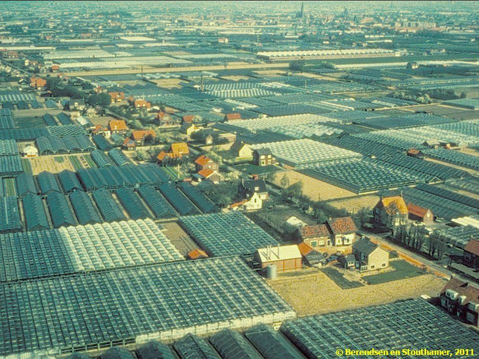 Extreem voorbeeld van een cultuurlandschap: het kassengebied bij Naaldwijk. Niet alleen de vegetatie en de fauna, maar ook de bodem, het water en zelfs het (micro-)klimaat zijn hier door de mens bepaald.