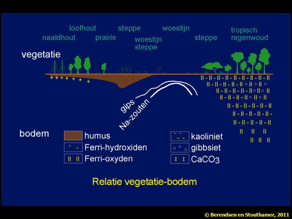 De relatie tussen vegetatie en bodem