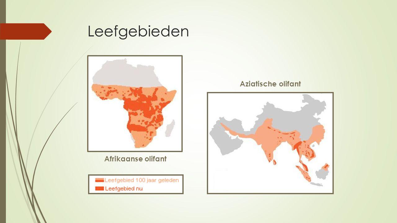 Leefgebieden Aziatische olifant Afrikaanse olifant