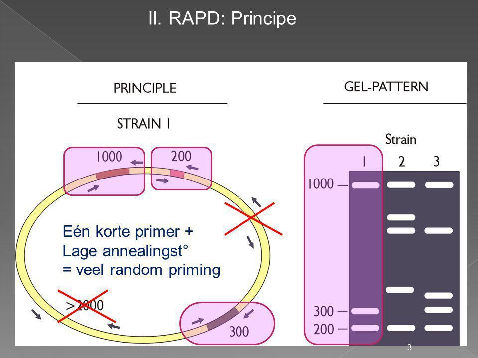 II. RAPD: Principe Eén korte primer + Lage annealingst°