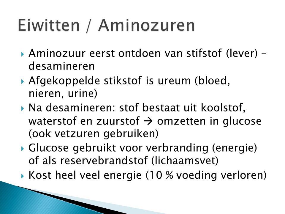 Eiwitten / Aminozuren Aminozuur eerst ontdoen van stifstof (lever) - desamineren. Afgekoppelde stikstof is ureum (bloed, nieren, urine)