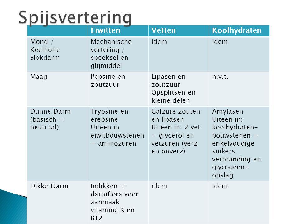 Spijsvertering Eiwitten Vetten Koolhydraten Mond / Keelholte Slokdarm