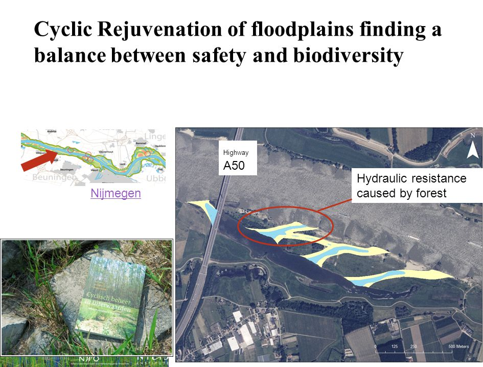 Cyclic Rejuvenation of floodplains finding a balance between safety and biodiversity