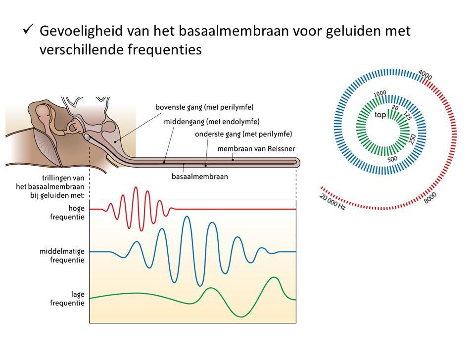 Gevoeligheid van het basaalmembraan voor geluiden met verschillende frequenties