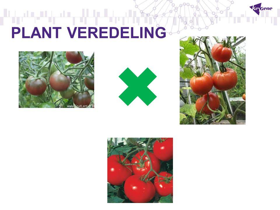 PLANT VEREDELING