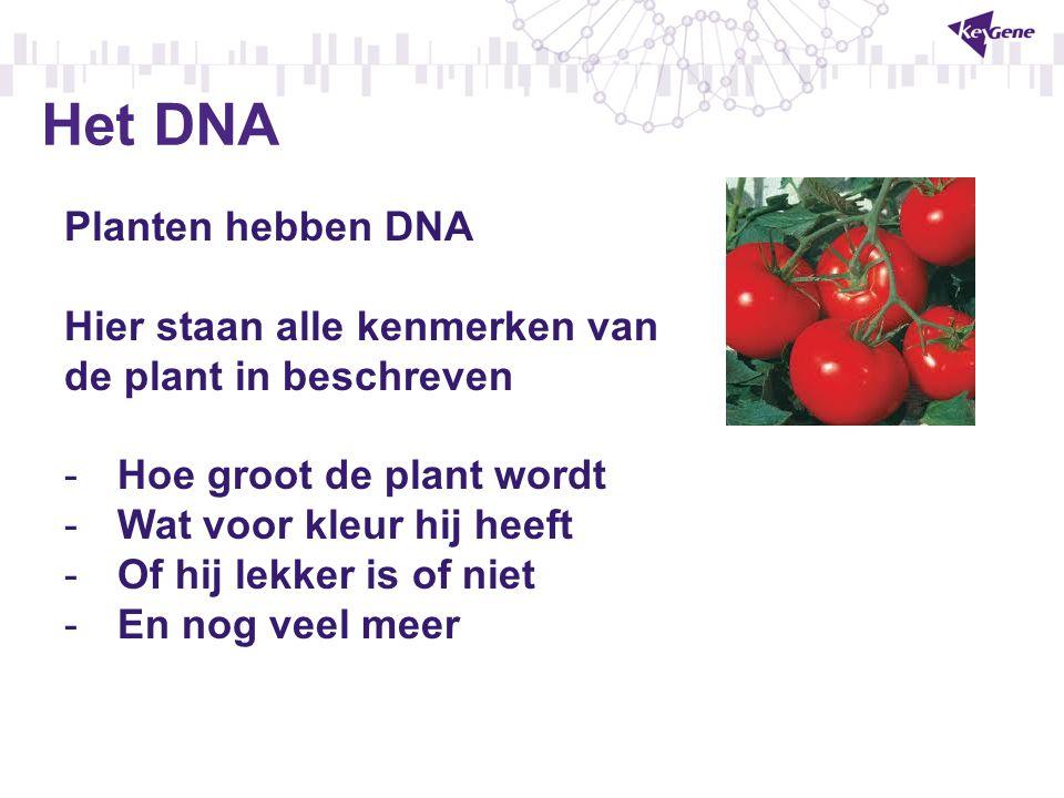 Het DNA Planten hebben DNA