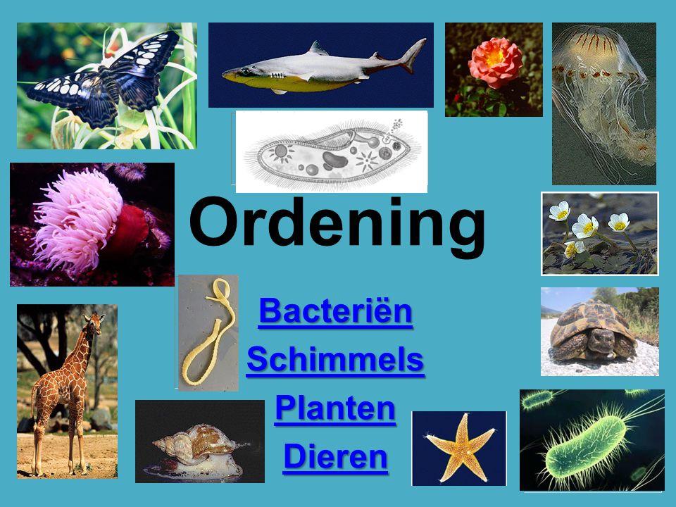Bacteriën Schimmels Planten Dieren
