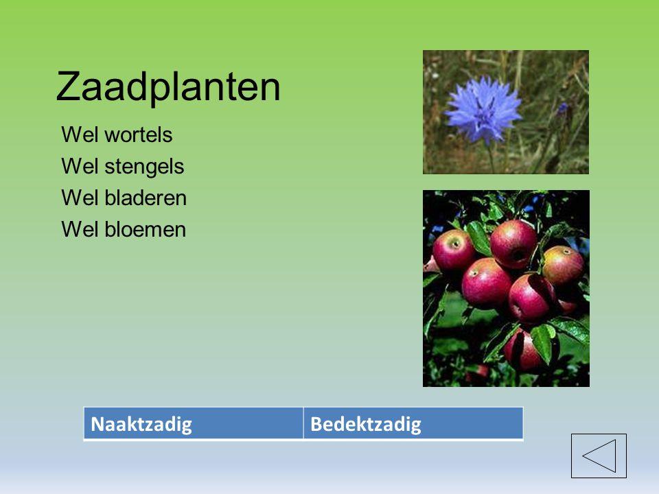 Zaadplanten Wel wortels Wel stengels Wel bladeren Wel bloemen