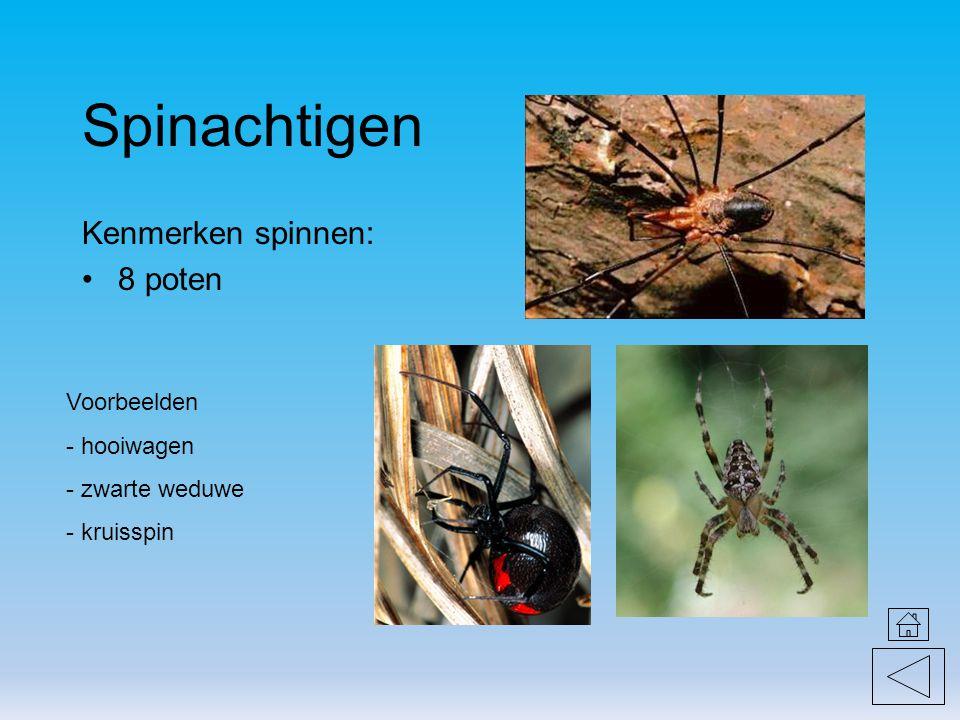 Spinachtigen Kenmerken spinnen: 8 poten Voorbeelden hooiwagen