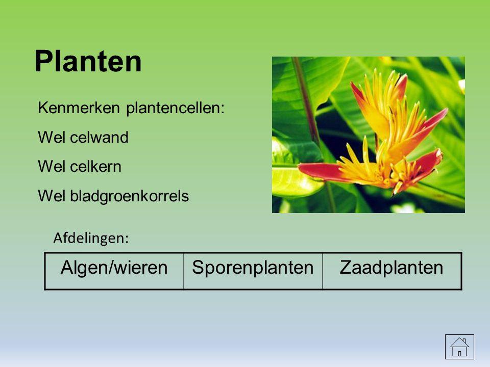 Planten Algen/wieren Sporenplanten Zaadplanten