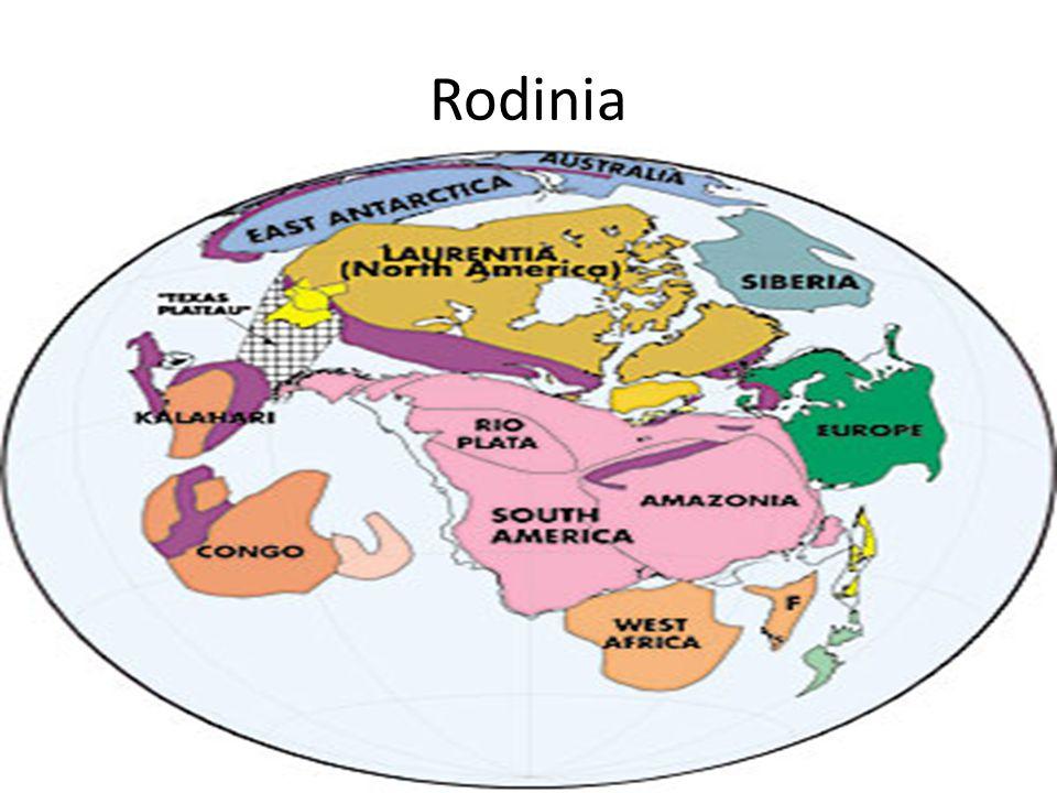 Rodinia 1MM ya:valt uiteen in Godwana (zuidelijk) en Laurentia (Afrika komt meer dan 10 meter omhoog)