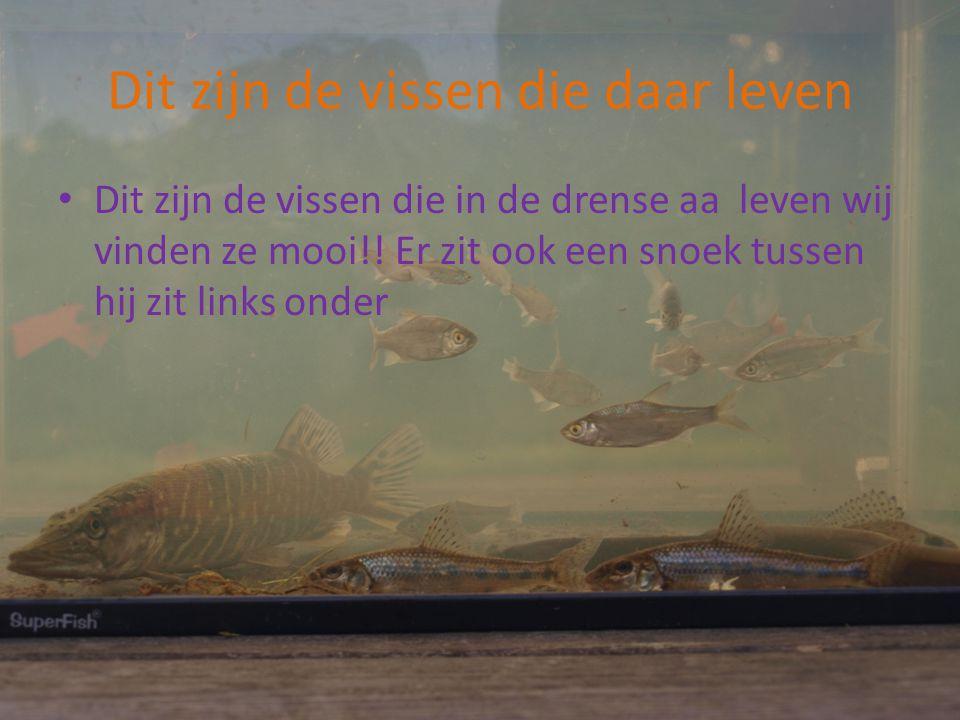 Dit zijn de vissen die daar leven