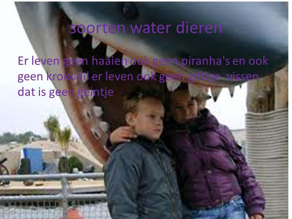 soorten water dieren Er leven geen haaien ook geen piranha s en ook geen krokodil er leven ook geen giftige vissen dat is geen geintje.