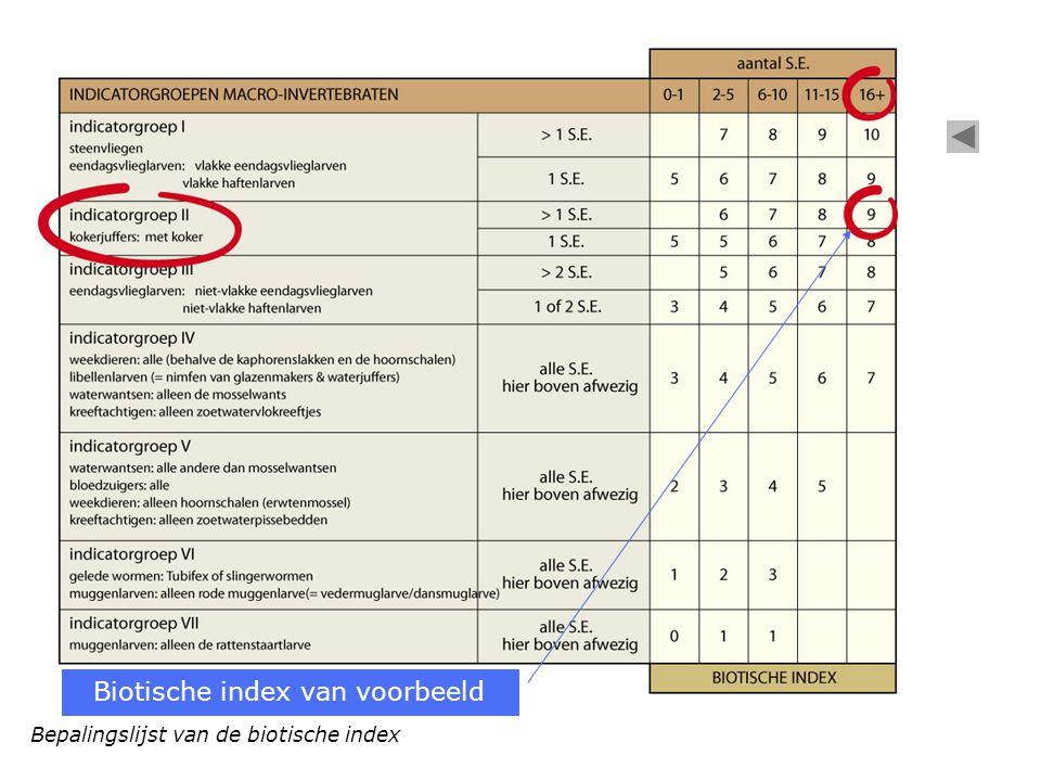 Biotische index van voorbeeld