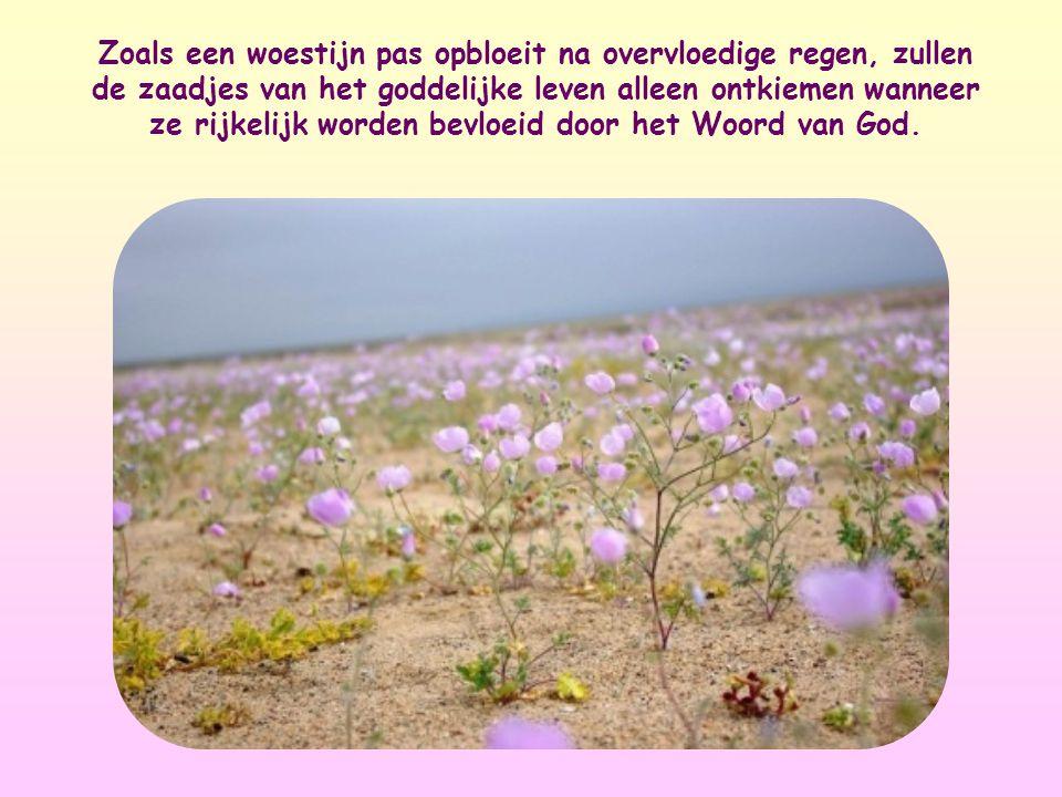 Zoals een woestijn pas opbloeit na overvloedige regen, zullen de zaadjes van het goddelijke leven alleen ontkiemen wanneer ze rijkelijk worden bevloeid door het Woord van God.